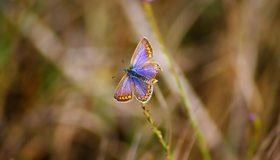 Картинка: Бабочка, крылья, летит, травинки