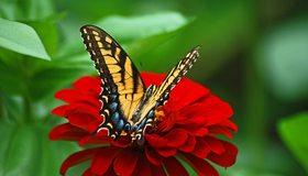 Картинка: Бабочка, крылья, цветок, красный, листья