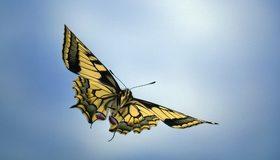Картинка: Бабочка, крылья, окрас, летит, небо, голубой фон