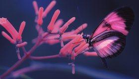 Картинка: Бабочка, крылья, сидит, цветок, стебли, размытость