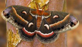 Картинка: Бабочка, мотылёк, окрас, крылья, сидит