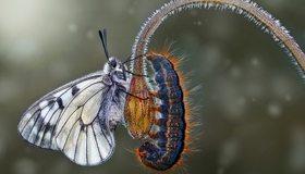 Картинка: Бабочка, гусеница, цветок, стебель