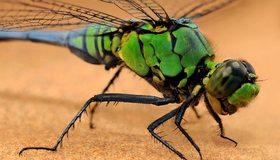 Картинка: Стрекоза, лапы, сидит, крылья, волоски, глаза, зелёная