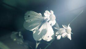 Картинка: Бабочка, ромашки, цветок, сидит