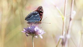 Картинка: Бабочка, сидит, пьёт, цветок, крылья, усики, боке, размытость
