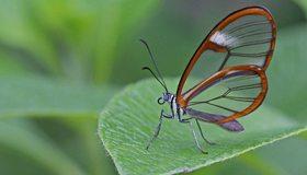 Картинка: Бабочка, крылья, лист, зелёный