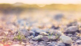 Картинка: Макро, трава, травинки, камешки, боке, фокус
