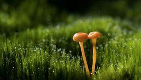 Картинка: Трава, грибочки, пара, капли, роса, блики