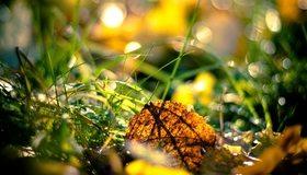 Картинка: Лист, осень, зелёная трава, веточки, блики, свет, солнечные лучи