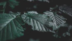 Картинка: Лист, прожилки, зелень, свет, тёмный фон