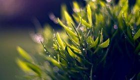 Картинка: Трава, зелень, листья, стебли, растение, роса, блики, природа