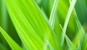 Картинка: Листья, трава, зелёные