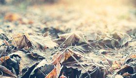 Картинка: Листья, лежат, сухие, осень
