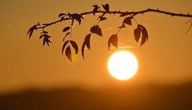 Картинка: Листья, ветка, паутина, закат, солнце