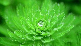 Картинка: Растение, зелёное, листочки, капли, роса, вода, форма