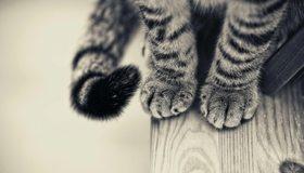 Картинка: Лапы, кошка, хвост, шерсть, сидит, доска