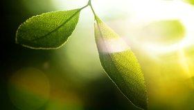 Картинка: Листья, стебли, зелёные, свет