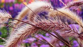 Картинка: Растение, трава, стебли, роса, капли