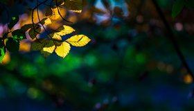 Картинка: Ветка, листья, блики, свет