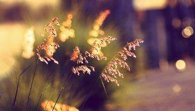 Картинка: Трава, боке, лето, вечер, закат