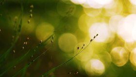 Картинка: Травинки, растение, боке, блики, свет