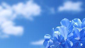 Картинка: Цветы, лепестки, голубые, небо, свет