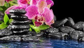 Картинка: Цветы, орхидея, камни, вода, брызги, капли