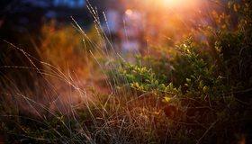Картинка: Травинки, трава, растение, вечер, лучи, блики, свет