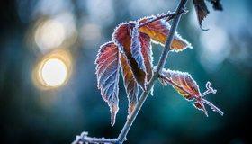 Картинка: Листья, ветка, иней, блики