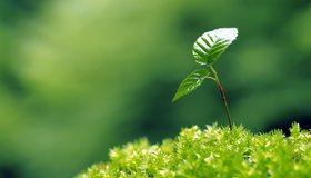 Картинка: Листья, трава, зелень, росток