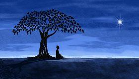 Картинка: Ночь, небо, дерево, девушка, силуэт, звезда, поле