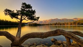 Картинка: Озеро, вода, дерево, ствол, камни, вечер, лес, горы