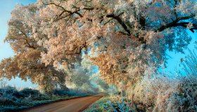 Картинка: Дерево, ветка, иней, заморозки, дорога, трава, небо