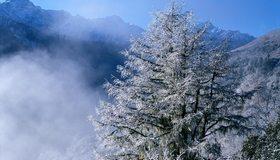 Картинка: Дерево, зима, снег, иней, горы, небо
