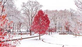 Картинка: Деревья, листва, снег, парк