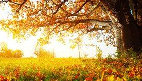 Картинка: Дерево, листва, трава, осень, день, солнечно, свет