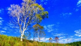 Картинка: Деревья, небо, облака, трава, поле, лес
