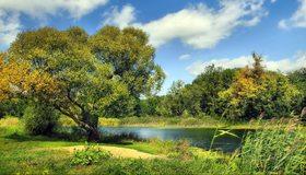 Картинка: Дерево, зелень, трава, камыш, река, вода, небо, облака, лето