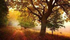 Картинка: Осень, лес, дерево, ветки, листья, трава, тропинка, день, свет