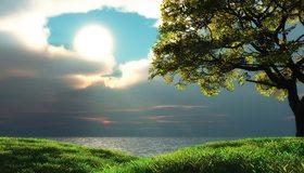 Картинка: Дерево, трава, зелень, небо, солнце, облака, вода, озеро, вечер