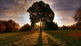 Картинка: Пейзаж, рассвет, дерево, поле, деревья, трава, солнечные лучи, тень