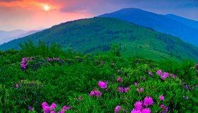 Картинка: Поле, цветы, зелень, горы, небо, солнце, горизонт