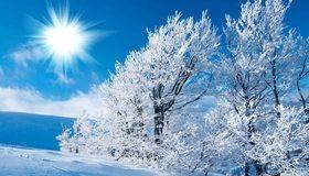 Картинка: Зима, поле, небо, деревья, солнце, снег, иней