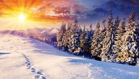 Картинка: Зима, снег, лес, хвоя, горы, небо, солнце, лучи, следы