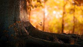 Картинка: Дерево, лес, насекомое, бабочка, ствол, корни