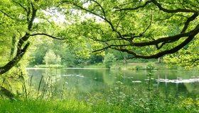 Картинка: Деревья, лес, речка, зелень, лето, трава, вода