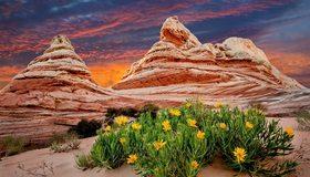 Картинка: Каньон, песок, цветы, растения, небо, облака