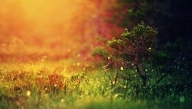 Картинка: Дерево, ветки, ёлка, трава, сосна, блики, свет, боке
