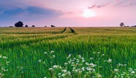 Картинка: Трава, колосья, поле, зелень, горизонт, силуэт, деревья, небо, облака, след, дорога