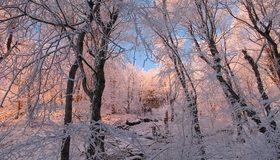 Картинка: Лес, деревья, зима, иней, снег, изморозь